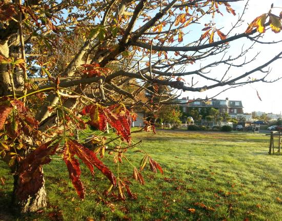 Autumn at The Livermead